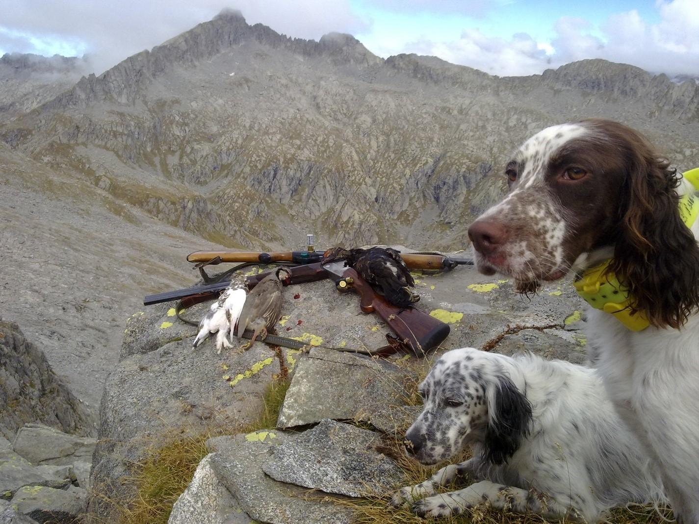 Tipica Fauna Alpina in Piemonte – Norme e tutela